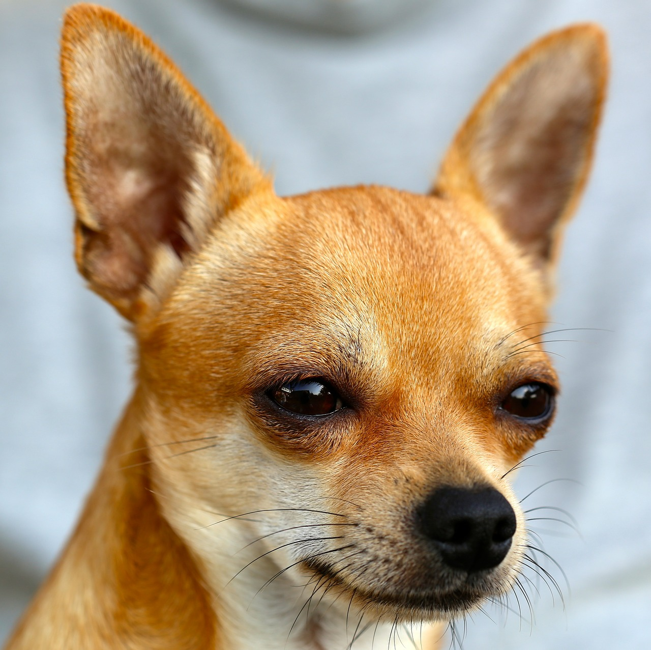 Czego warto dowiedzieć się o rozmnażaniu psów?